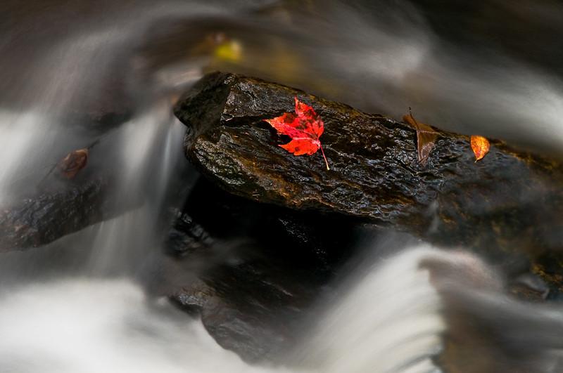 Raging Waters klinging leaf - Newfane, VT