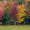Fall Colors in Bloom along Hwy 9 - Molly Stark Trail, VT