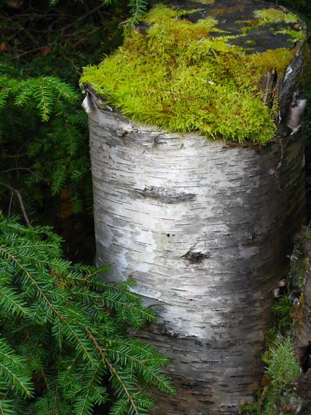 Aspen & Moss - White Mountain, NH
