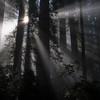 Sunbeams and redwoods, Del Norte Coast Redwoods SP, CA, USA