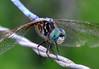 Cj's Dragonfly 1