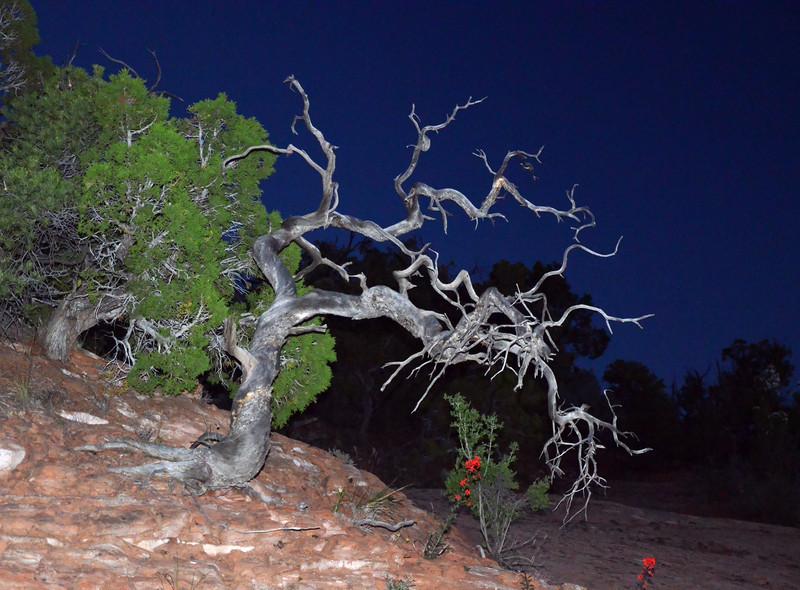 Navajo Reservation - Arizona
