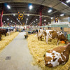 PA Farm Show-05453