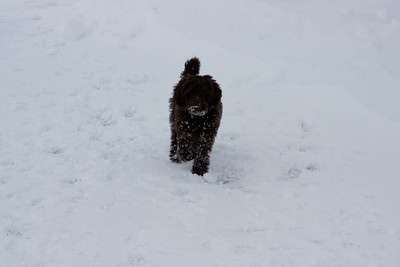 Winter Snow Baily and Sydnet-00133