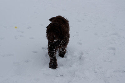 Winter Snow Baily and Sydnet-00127