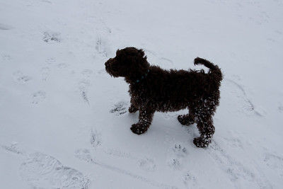 Winter Snow Baily and Sydnet-00125