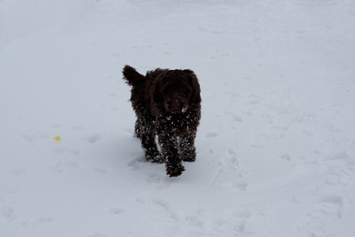 Winter Snow Baily and Sydnet-00126