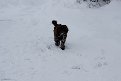 Winter Snow Baily and Sydnet-00130