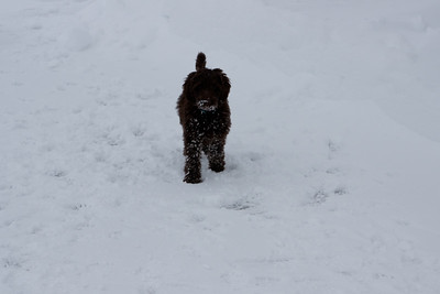 Winter Snow Baily and Sydnet-00132