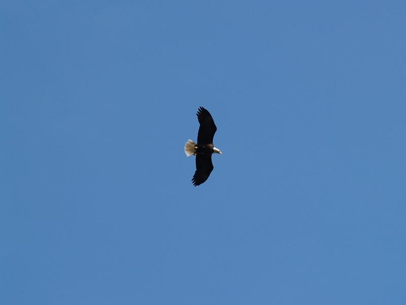 A few eagles flew right overhead (2009).