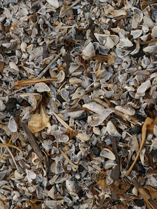 Shells on the shore of Lake Erie at Sheldon Marsh