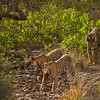 Tiger mother and cubs in a forest