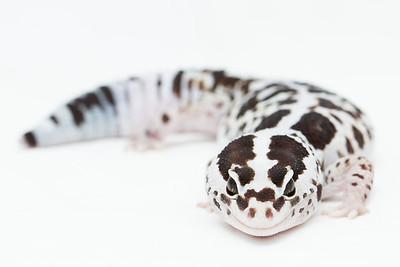 Hawley's Reptiles