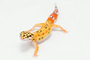 leopard geckos smugmug (11 of 17)