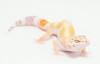 leopard geckos smugmug (1 of 17)