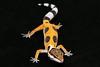 smugmus geckos (16 of 17)