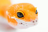 leopard geckos smugmug (17 of 17)