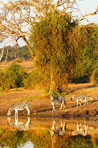 Chobe NP, Botswana June 2014