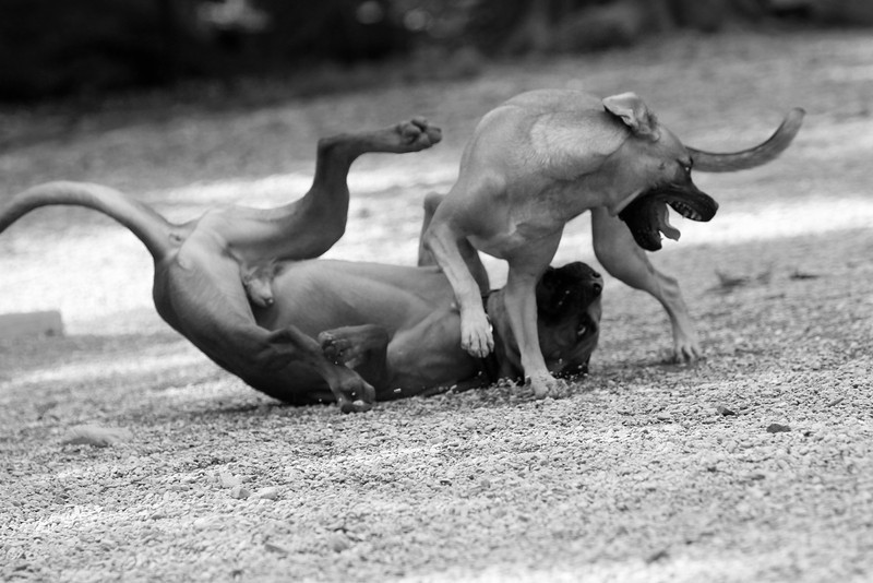 dogs_5600