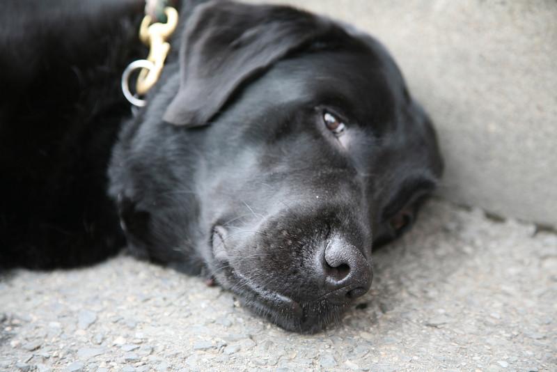 Resting Pooch