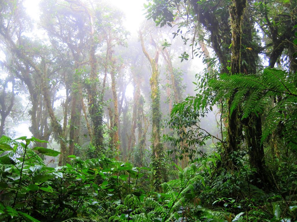 Cloud forest Costa Rica