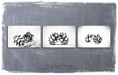 Pinecone Trio - B&W Unframed Prints