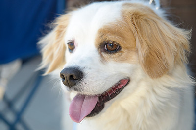 20110312 PetSmart Adoption Event-9