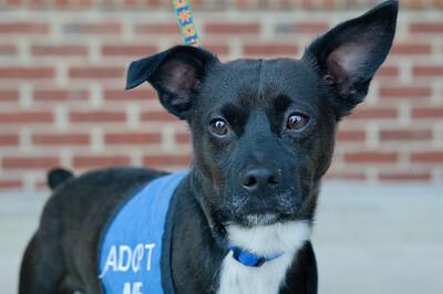 20110312 PetSmart Adoption Event-14