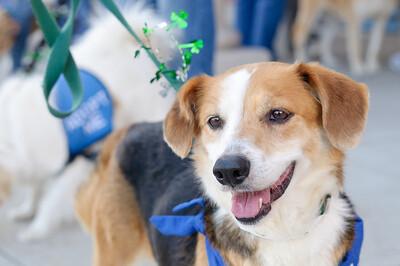 20110312 PetSmart Adoption Event-37