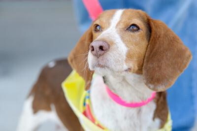 20110312 PetSmart Adoption Event-60