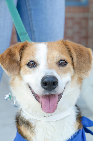 20110312 PetSmart Adoption Event-19