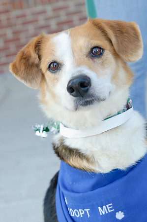 20110312 PetSmart Adoption Event-16