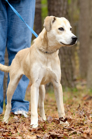 37 - Retriever Mix
