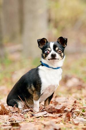 87 - Chihuahua