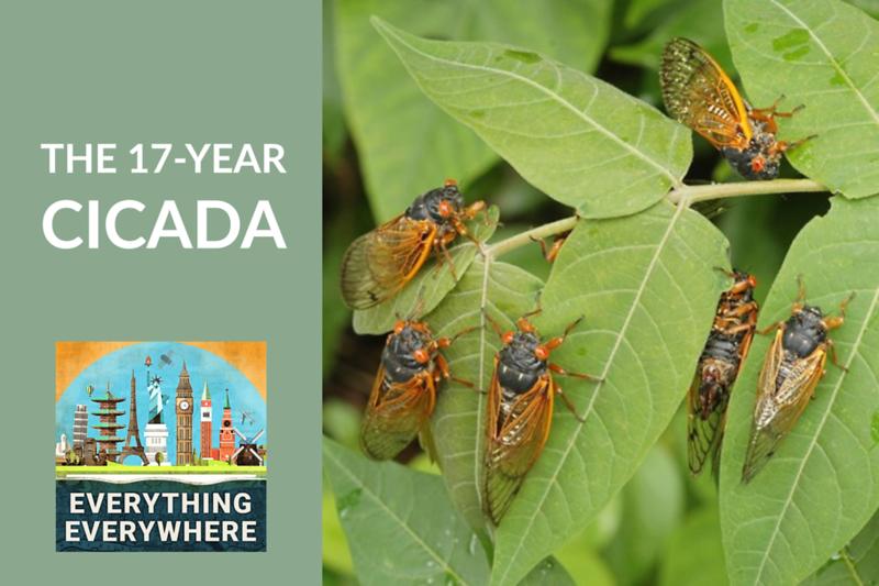 The 17-Year Cicada