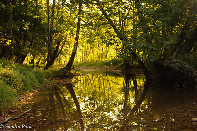 9-13-15: Down by the Maury River