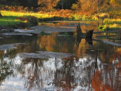 10-22-15: SPring Creek