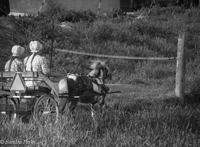 5-4-15: pony cart on Mole Hill