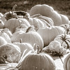 10-29-18: Ghost pumpkins