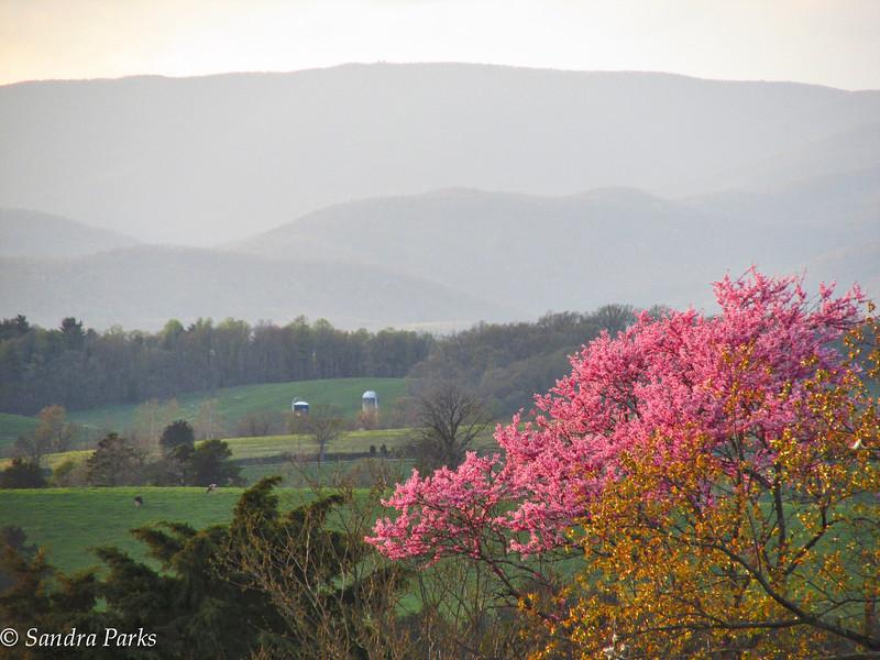 4-21-15: spring evening, on Centerville