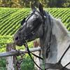 6-24-15: Pony in waiting