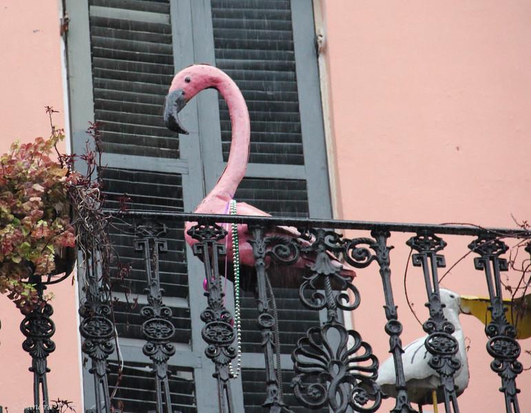 Flamingo in the rain