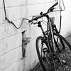 6-14-15: Bike, with cat.