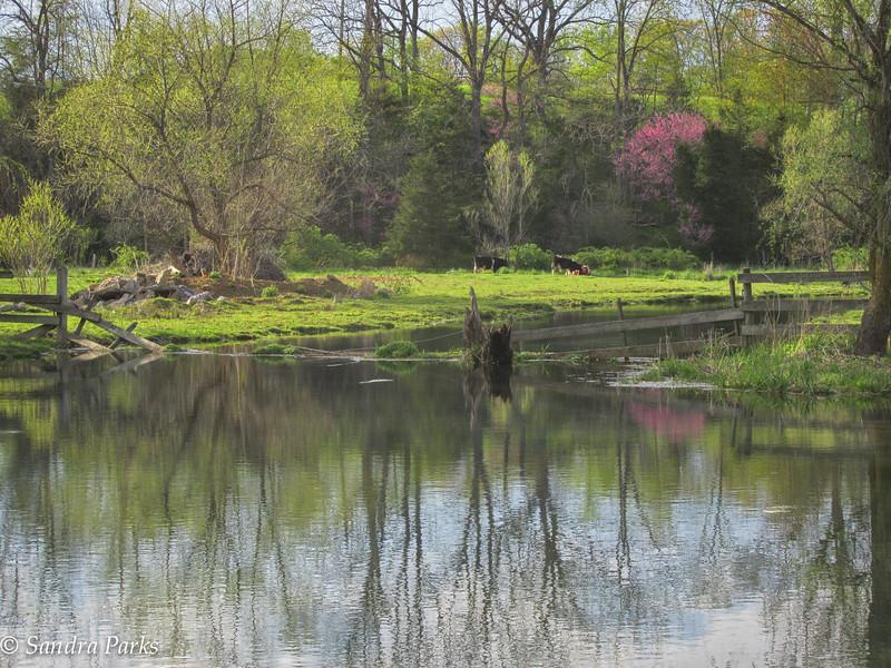 4-29-15: Spring Creek.