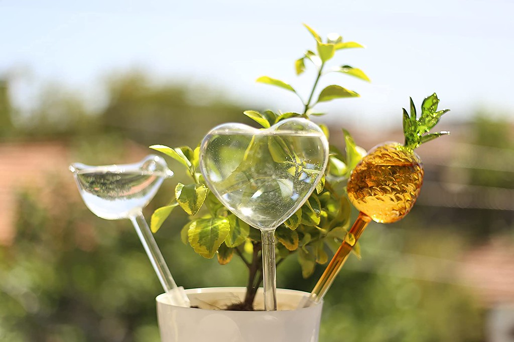 How to Use Plant Watering Globes