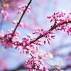 pink _94A7199