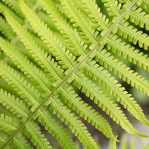 green fern_94A7355