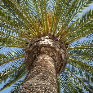 palm_94A5642