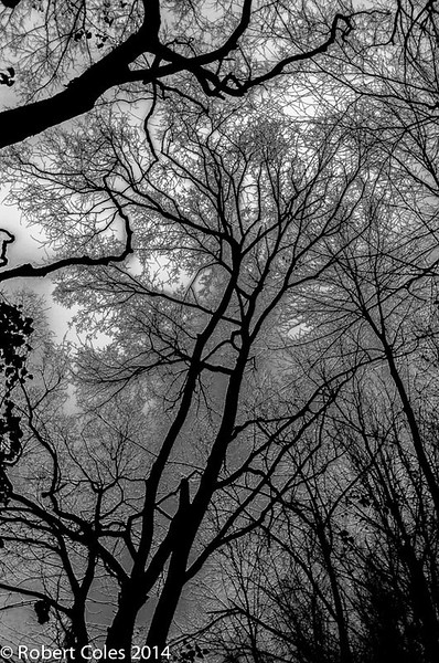 Trees in the James River Park, Richmond, VA
