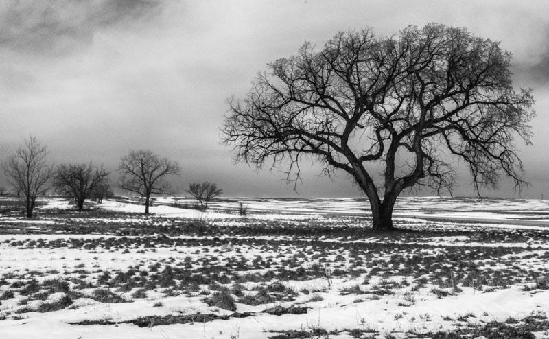 Colorado Tree, Wray, Colorado
